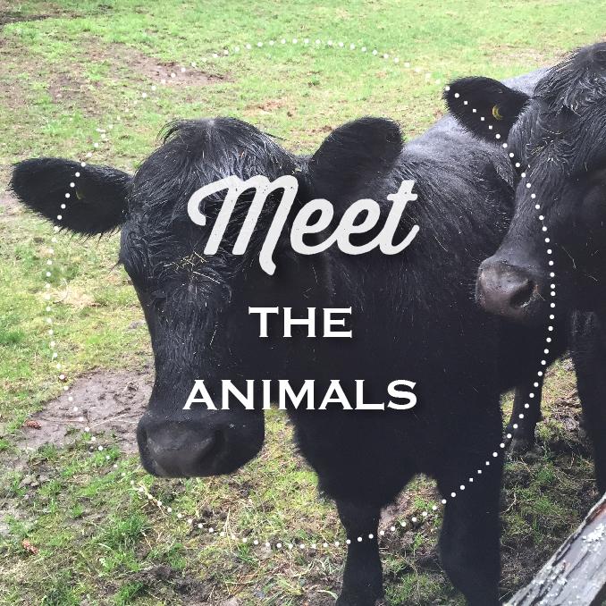 CHF-farm-678x678_animals