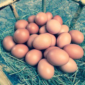 Eggs-Side
